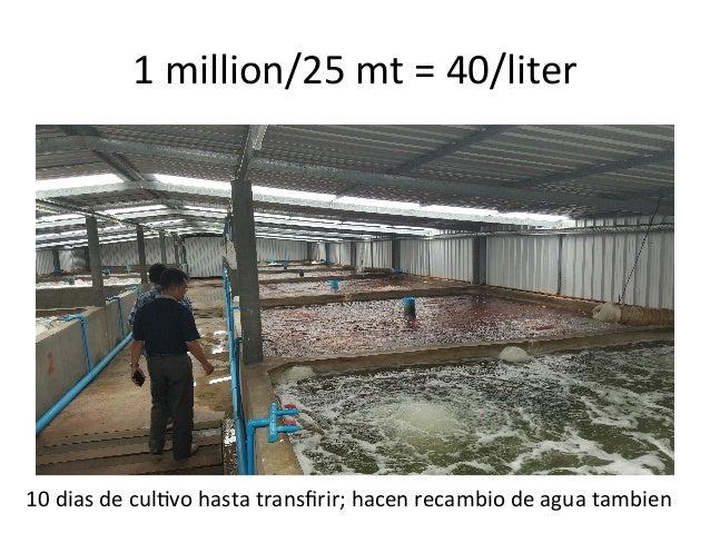 V101 cultivo de camar n sostenible por eleccion o necesidad for Piscina 6500 litros