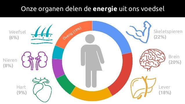 Onze organen delen de energie uit ons voedsel Skeletspieren (22%) Brein (20%) Lever (18%) Hart (9%) Nieren (8%) Weefsel (6...