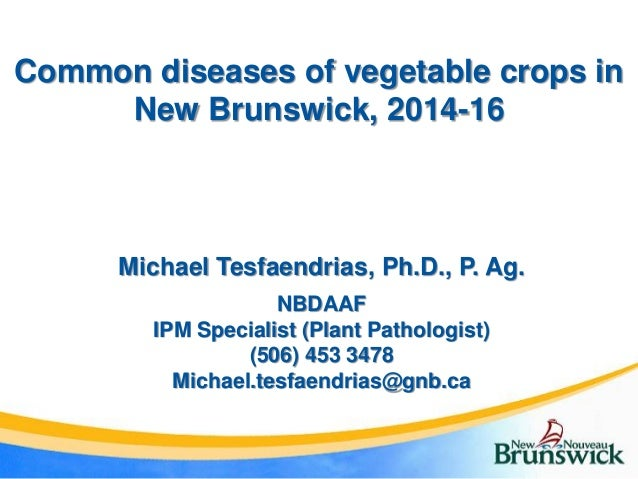 Common diseases of vegetable crops in New Brunswick, 2014-16 Michael Tesfaendrias, Ph.D., P. Ag. NBDAAF IPM Specialist (Pl...