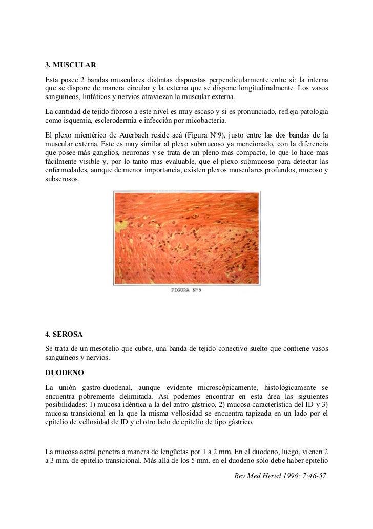 histologia del intestino delgado
