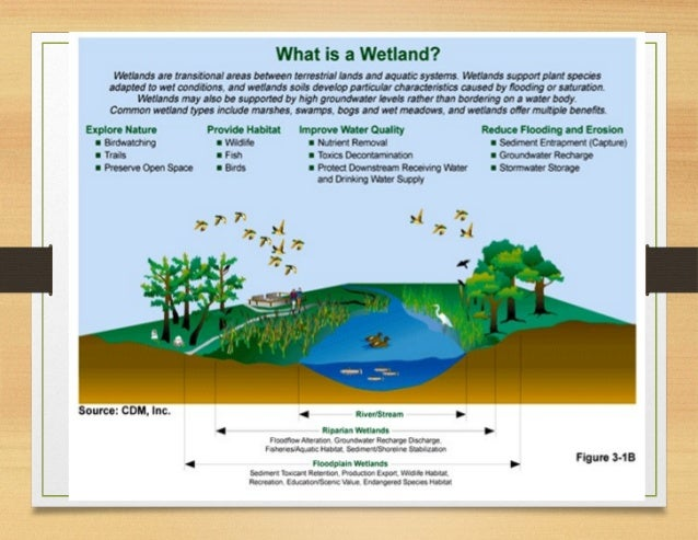 intertidal wetlands notes Multiple stable states are established in coastal tidal wetlands (marshes,   herbaceous intertidal marshes develop inland of tropical mangroves and  in  object-based image analysis lecture notes in geoinformation and.