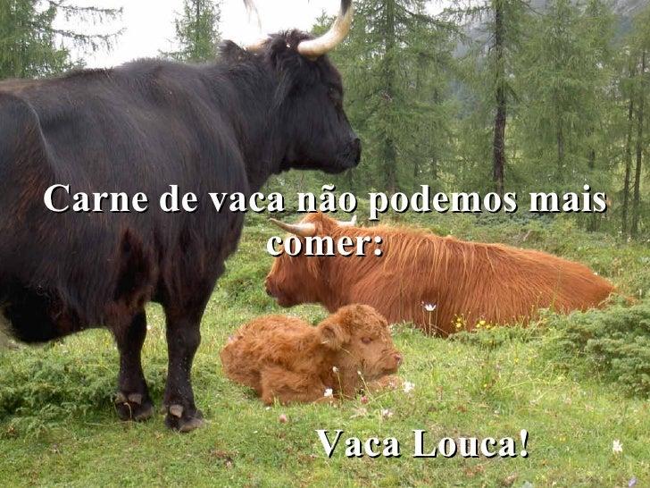 Carne de vaca não podemos mais comer: Vaca Louca!