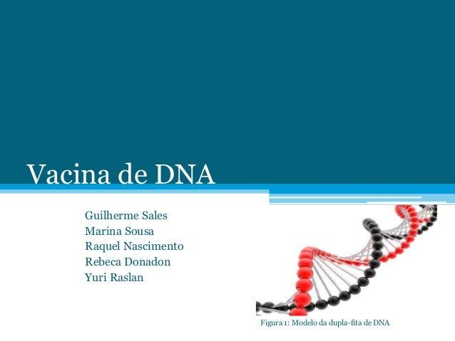 Vacina de DNA Guilherme Sales Marina Sousa Raquel Nascimento Rebeca Donadon Yuri Raslan Figura 1: Modelo da dupla-fita de ...