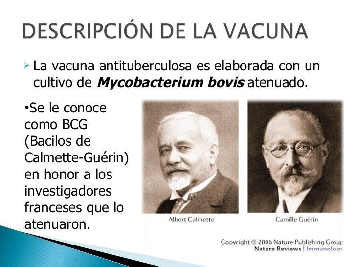Vacuna BCG antituberculosa Slide 2
