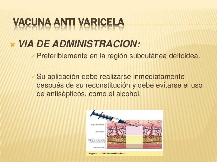 VACUNA ANTI VARICELA   VIA DE ADMINISTRACION:       Preferiblemente   en la región subcutánea deltoidea.       Suaplica...