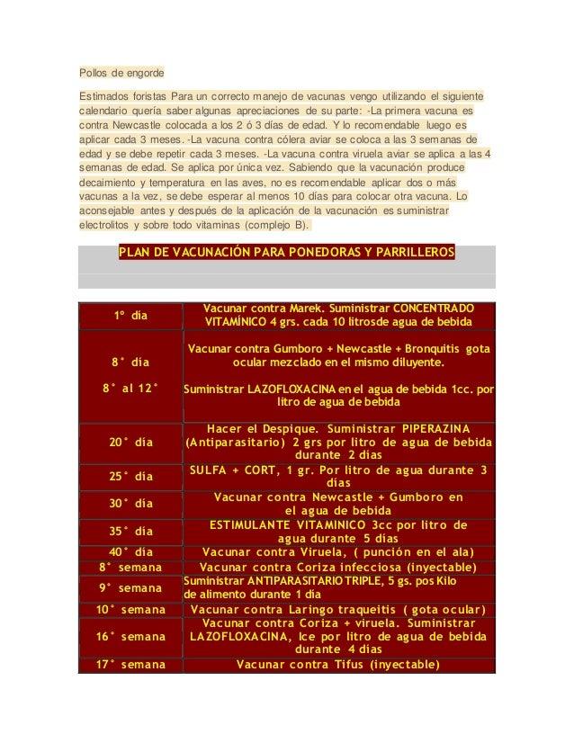 Pollos de engorde  Estimados foristas Para un correcto manejo de vacunas vengo utilizando el siguiente  calendario quería ...