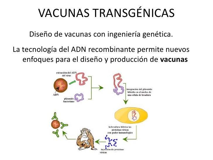 Vacunas transgenicas