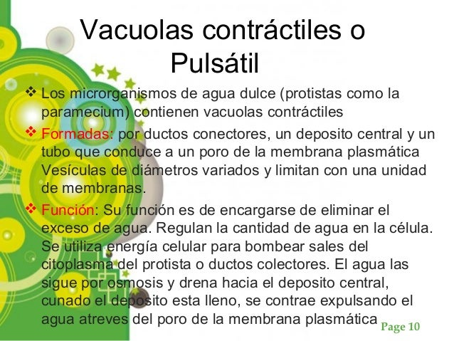 Page 10 Vacuolas contráctiles o Pulsátil  Los microrganismos de agua dulce (protistas como la paramecium) contienen vacuo...