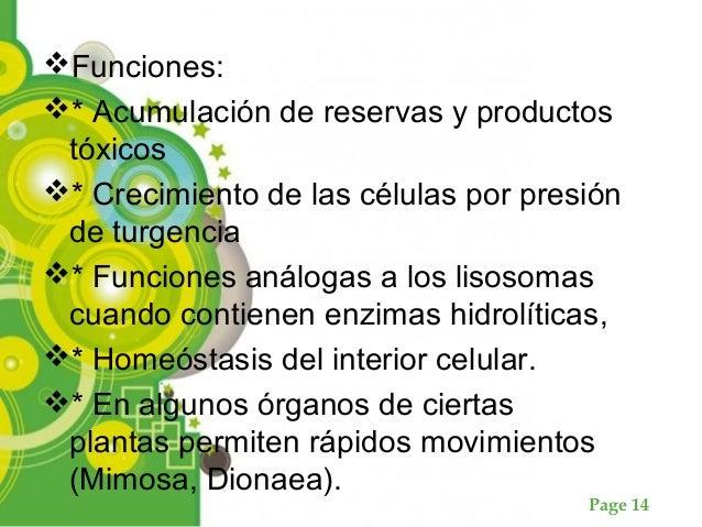 Page 14 Funciones: * Acumulación de reservas y productos tóxicos * Crecimiento de las células por presión de turgencia ...