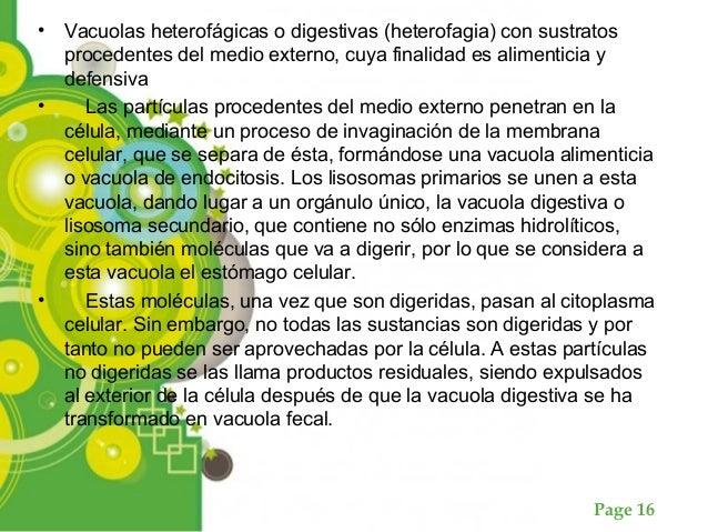 Page 16 • Vacuolas heterofágicas o digestivas (heterofagia) con sustratos procedentes del medio externo, cuya finalidad es...