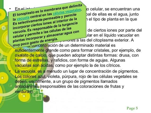 Page 5 • En el interior de las vacuolas, en el jugo celular, se encuentran una gran cantidad de sustancias. La principal d...