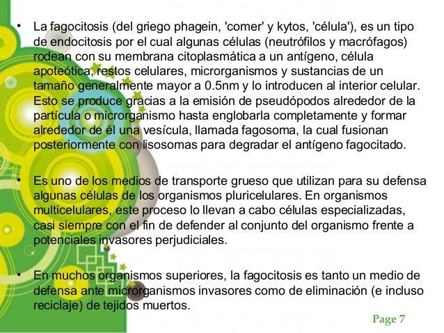 Page 7 • La fagocitosis (del griego phagein, 'comer' y kytos, 'célula'), es un tipo de endocitosis por el cual algunas cél...