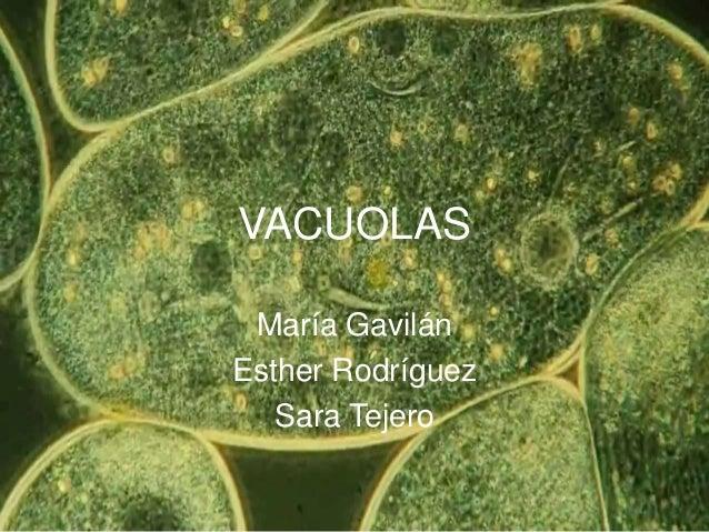 VACUOLAS María Gavilán Esther Rodríguez Sara Tejero
