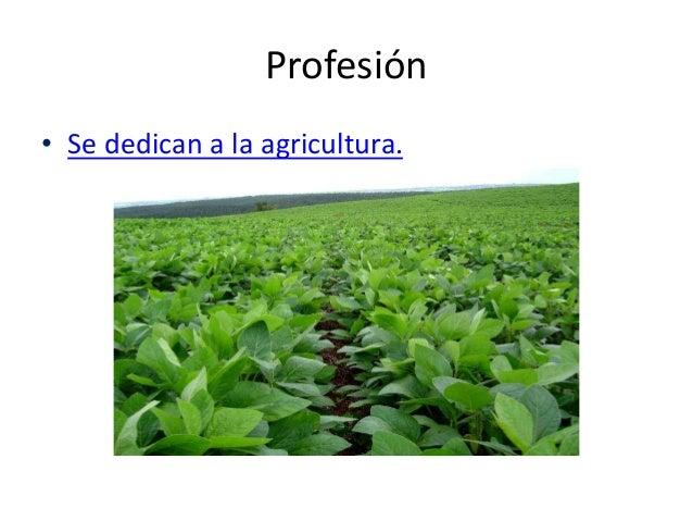 Profesión • Se dedican a la agricultura.