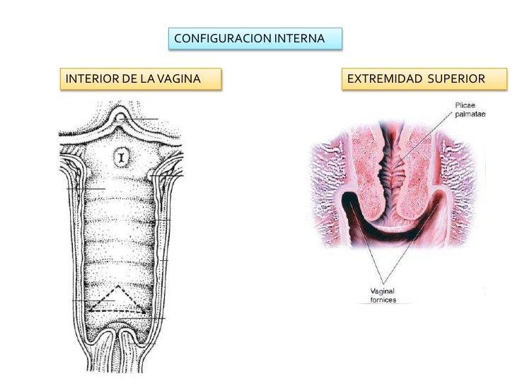 Interior of vagina 15