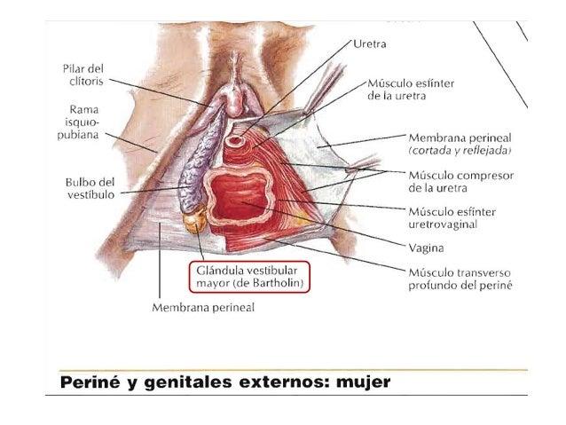 parte superior vagina