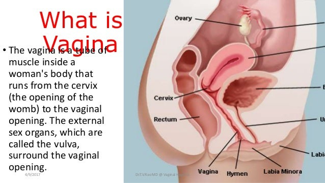 vaginal hygiene what every women should know, Human Body