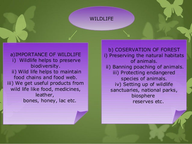 the significance of van mahotsav for biodiversity Van mahotsav – rooting for sustainability  by monsanto india  july 4, 2017  safe-house of biodiversity  now, more than ever, it is important for the agriculture industry to adopt newer, sustainable practices which will help conserve our forests.