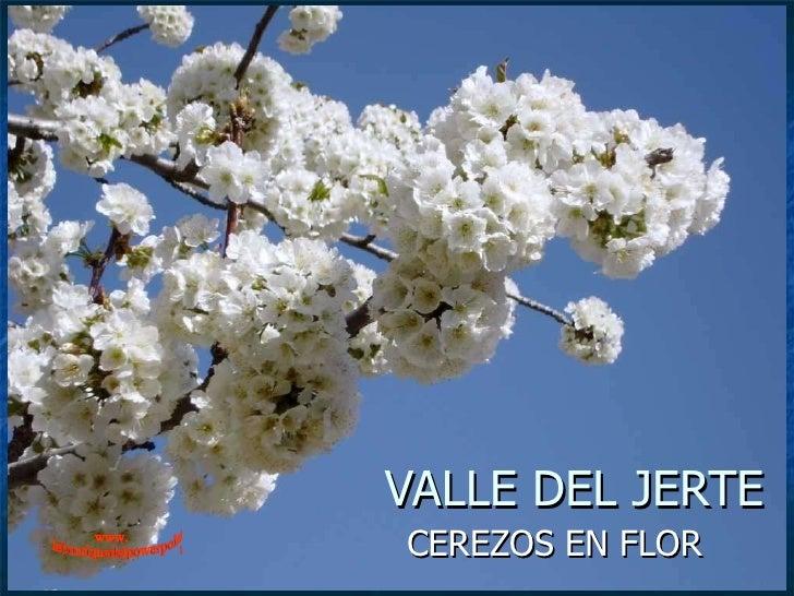 VALLE DEL JERTE CEREZOS EN FLOR www. laboutiquedelpowerpoint. com