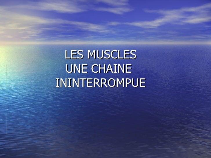 LES MUSCLES UNE CHAINE  ININTERROMPUE