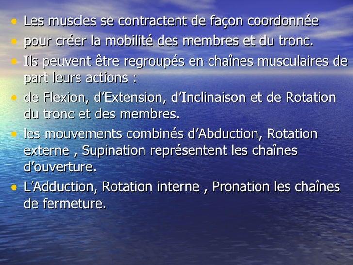 Les muscles, une chaîne interrompue Slide 2