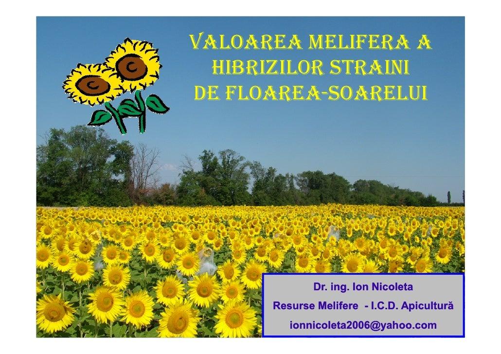 VALOAREA MELIFERA A   HIBRIZILOR STRAINI DE FLOAREA-SOARELUI                   Dr. ing. Ion Nicoleta       Resurse Melifer...