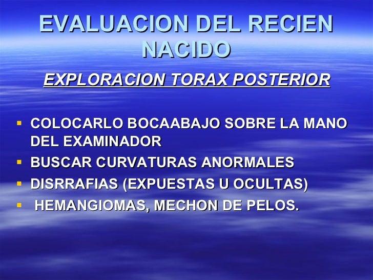 EVALUACION DEL RECIEN NACIDO <ul><li>EXPLORACION TORAX POSTERIOR </li></ul><ul><li>COLOCARLO BOCAABAJO SOBRE LA MANO DEL E...