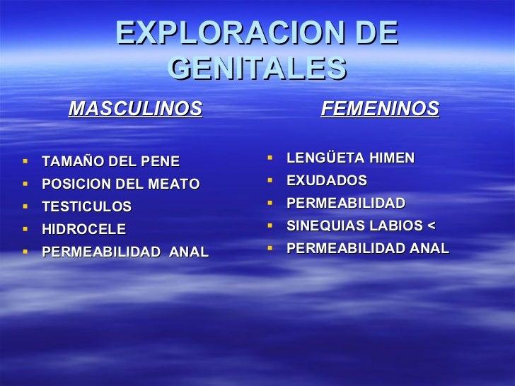 EXPLORACION DE GENITALES <ul><li>MASCULINOS </li></ul><ul><li>TAMAÑO DEL PENE </li></ul><ul><li>POSICION DEL MEATO </li></...