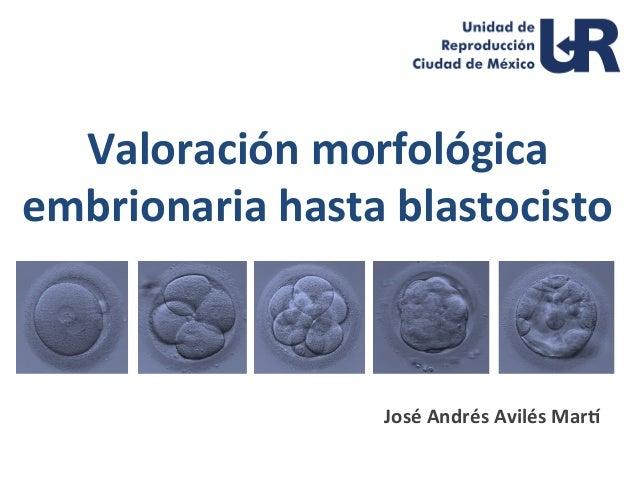 valoracin-morfolgica-embrionaria-hasta-blastocisto-1-638.jpg?cb=1499437804