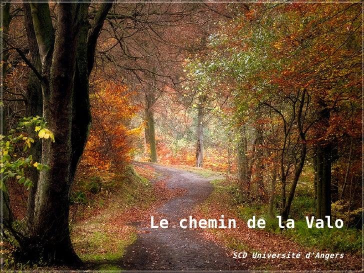 Le chemin de la Valo         SCD Université d'Angers
