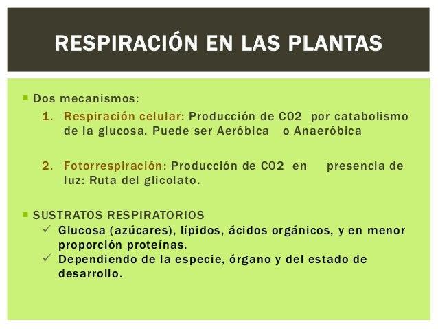 Ecuacion de la fotosintesis y respiracion celular 92