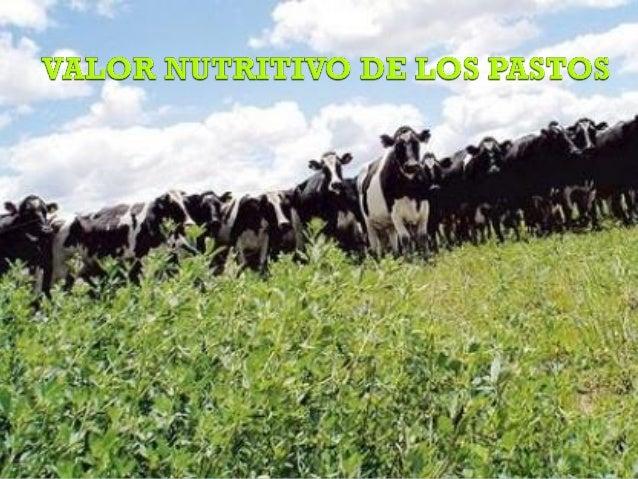 COMPOSICIÓN QUÍMICA DE LOS PASTOS  AGUA  COMPUESTOS NITROGENADOS  Aminoácidos Proteínas Amidas Aminas Nitritos Nitratos Al...