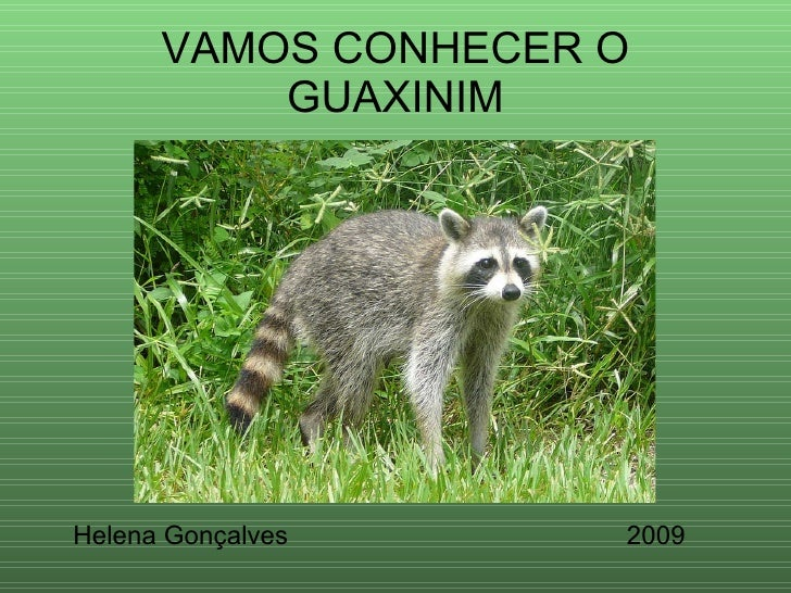 VAMOS CONHECER O GUAXINIM Helena Gonçalves 2009