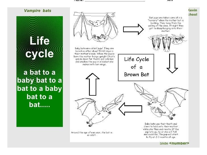 Vampire Bats By Kevin