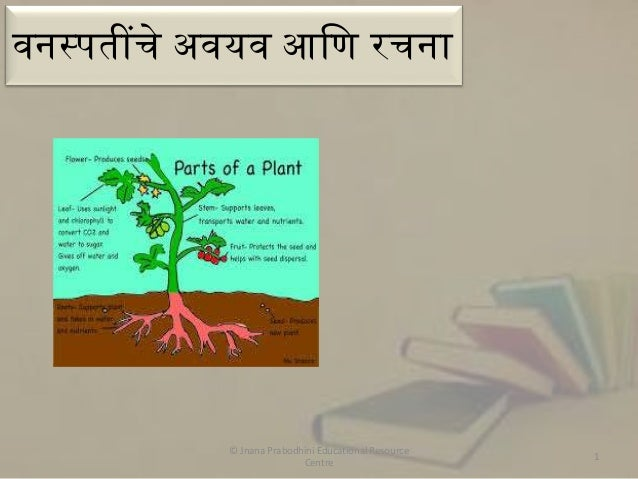 वनस्पतींचे अवयव आणि रचना  © Jnana Prabodhini Educational Resource Centre  1