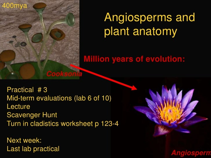 400mya<br />Angiosperms and plant anatomy<br />Million years of evolution: <br />Cooksonia<br />Practical  # 3<br />Mid-te...