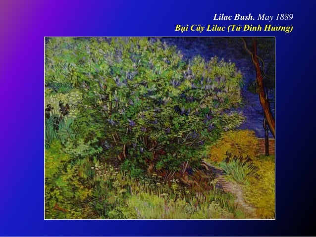 Lilac Bush. May 1889 Bụi Cây Lilac (Tử Đinh Hương)