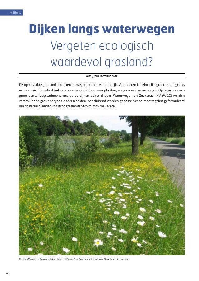 1414 Artikels Dijken langs waterwegen Vergeten ecologisch waardevol grasland? Andy Van Kerckvoorde De oppervlakte grasland...