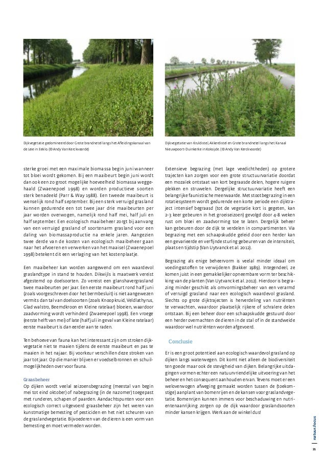 21 natuur•focus 21 natuur•focus sterke groei met een maximale biomassa begin juni wanneer tot bloei wordt gekomen. Bij een...