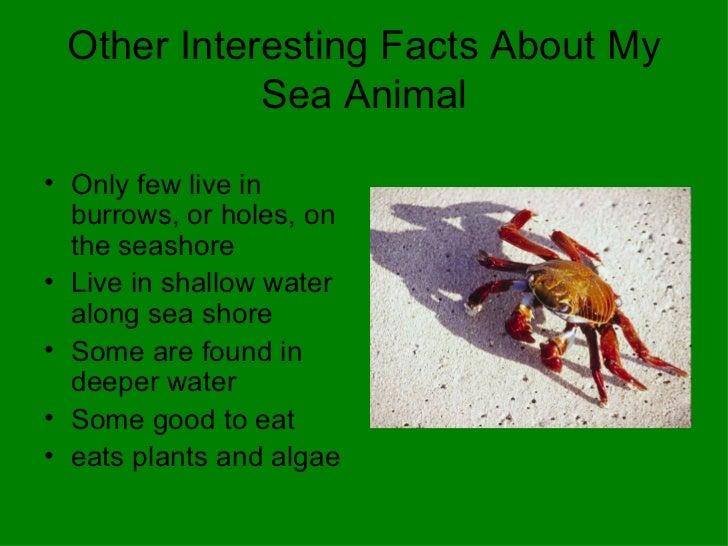Mrs Vardaro Grade 2 Ocean Animals