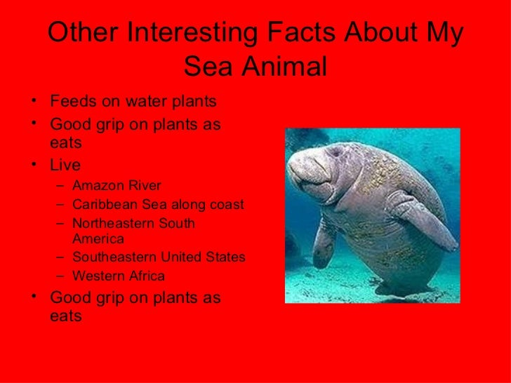 Image of: 10 Amazing 57 Other Interesting Facts About My Sea Animal Slideshare Mrs Vardaro Grade Ocean Animals