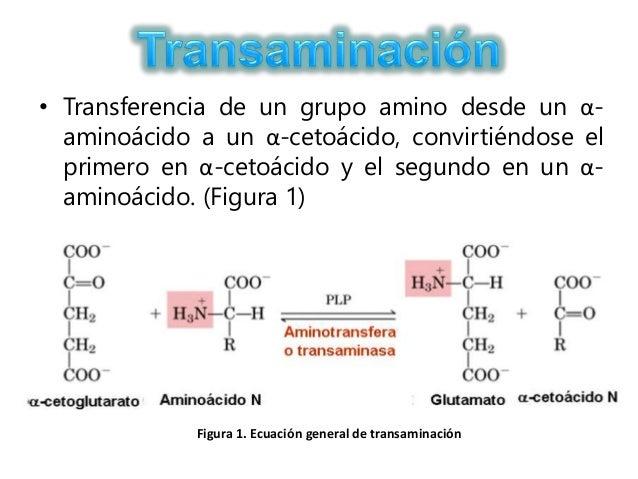 reacciones anabolicas pdf