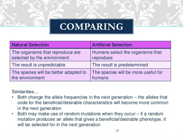 Comparing Natural And Artificial Selection