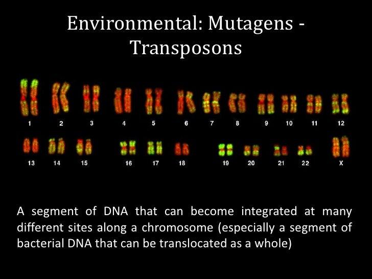 environmental mutagens - photo #7