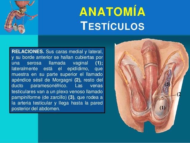 parte superior adulto vaginal en Cartagena