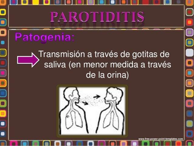 • Luego de multiplicar en células del tracto respiratorio el virus es llevado por la sangre a otros órganos, principalment...