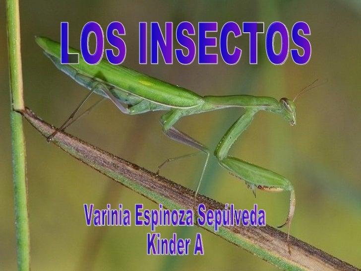 LOS INSECTOS Varinia Espinoza Sepúlveda Kinder A