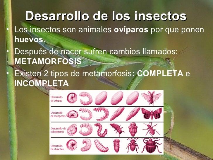 Varinia los insectos - Como ahuyentar los mosquitos ...