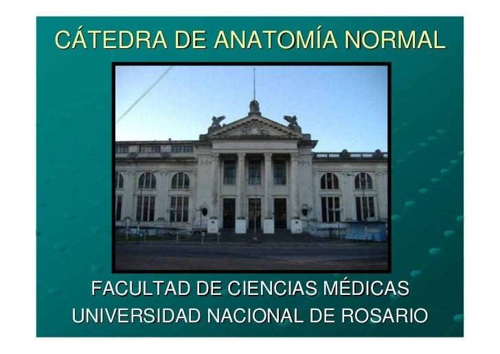 CÁTEDRA DE ANATOMÍA NORMAL       FACULTAD DE CIENCIAS MÉDICAS  UNIVERSIDAD NACIONAL DE ROSARIO