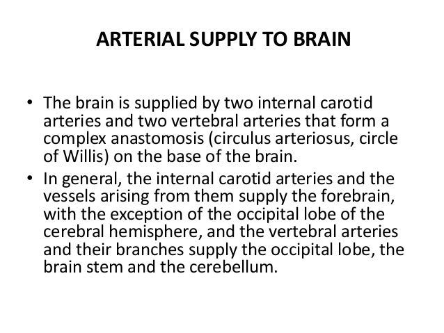 • The brain is supplied by two internal carotid arteries and two vertebral arteries that form a complex anastomosis (circu...